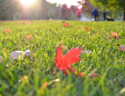 Tips For Fall Lawn Care