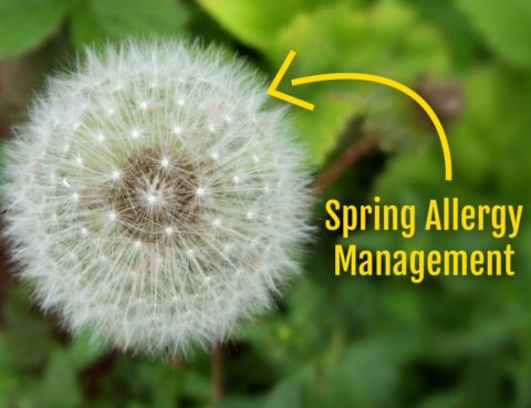 Spring Allergy Management